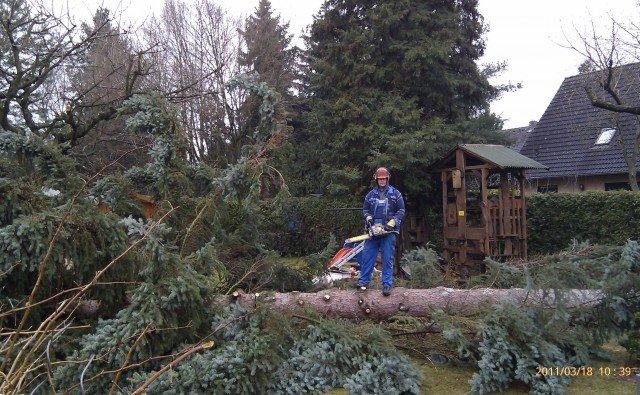 Baumfällungen und Baumbeschnitt